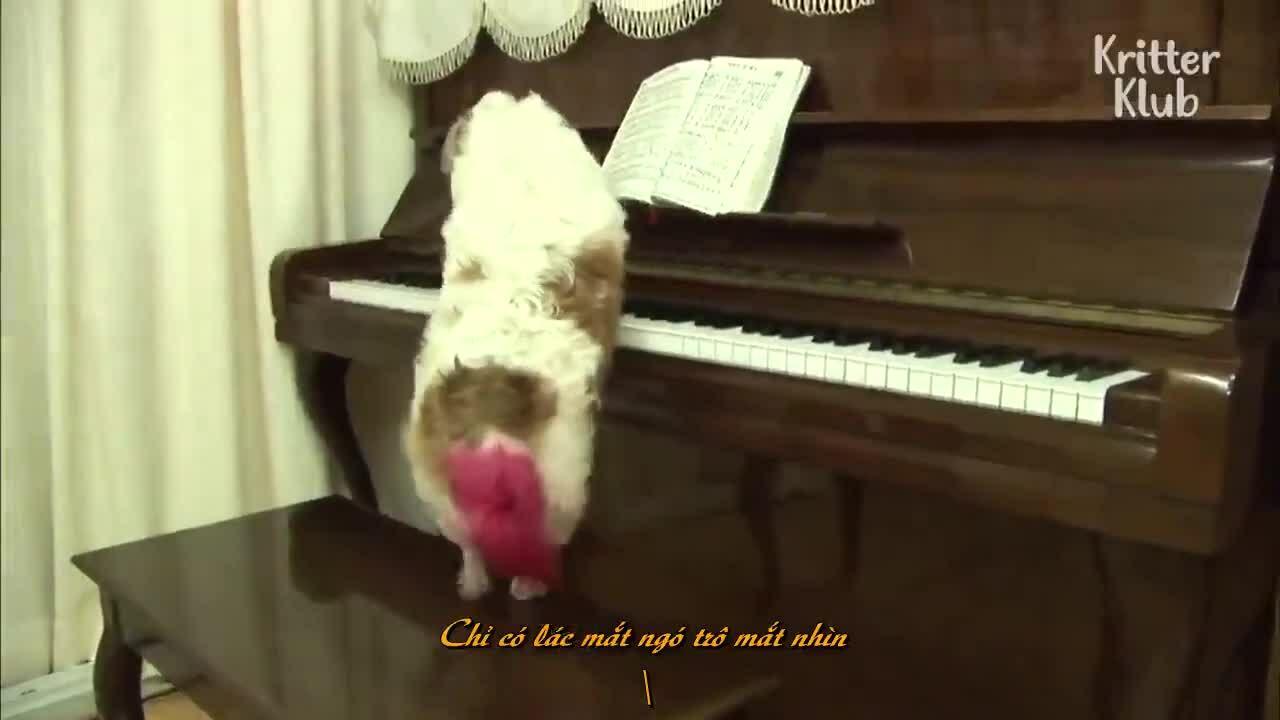 Hàng xóm kéo qua nhà nghe cún đàn piano