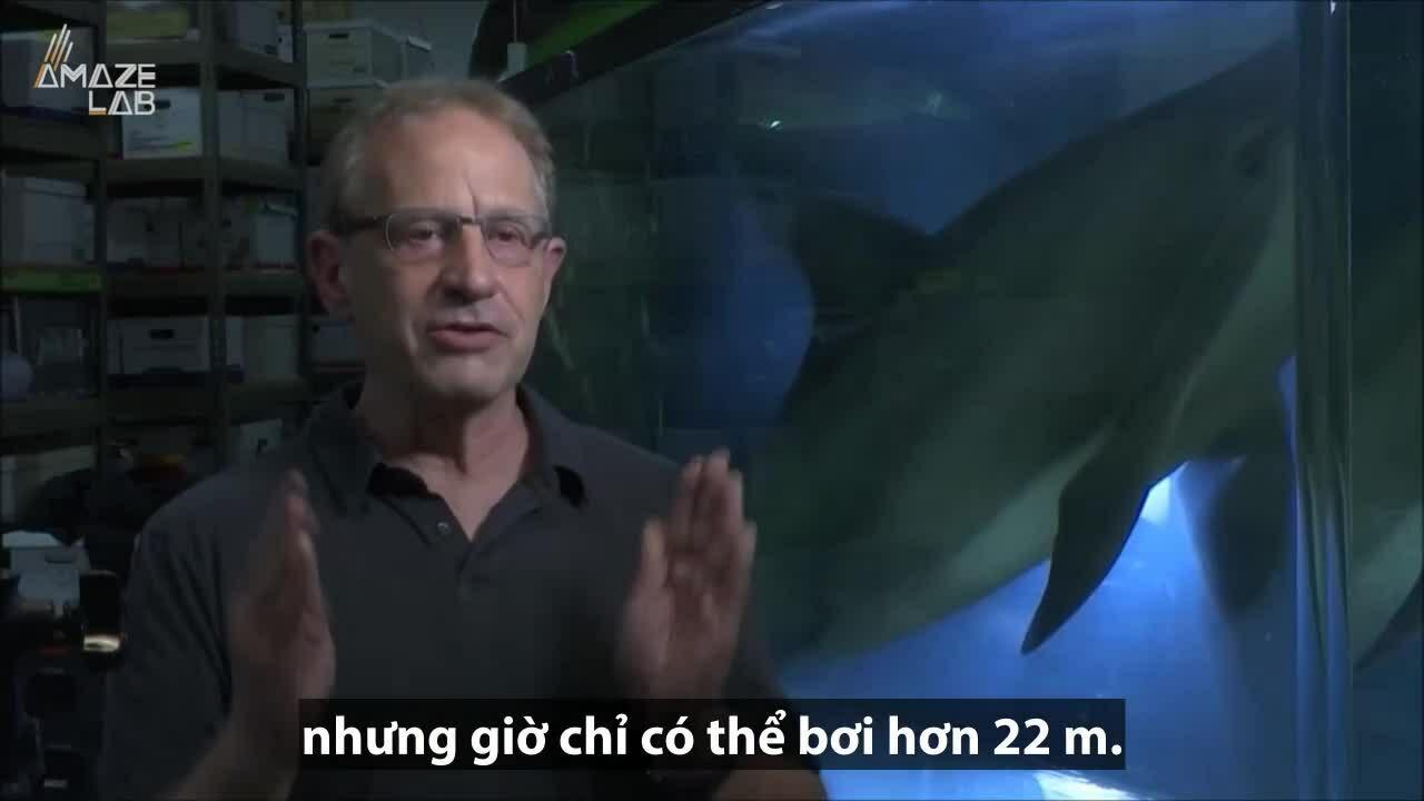 Robot giống hệt cá heo thật bơi dưới bể nước