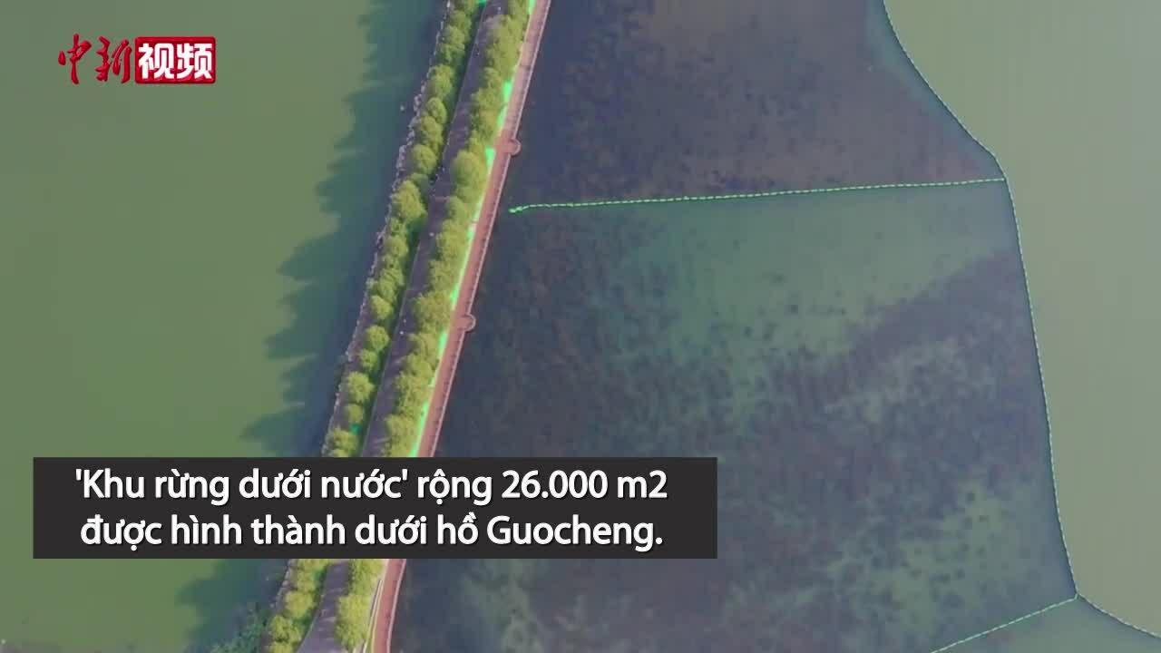 Rừng dưới nước với 460.000 loại cây thủy sinh
