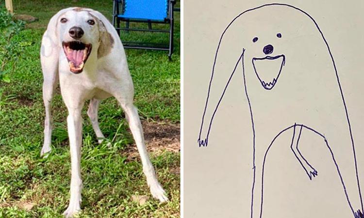 'Cún ngáo' giật giải quán quân trong cuộc thi vẽ chó