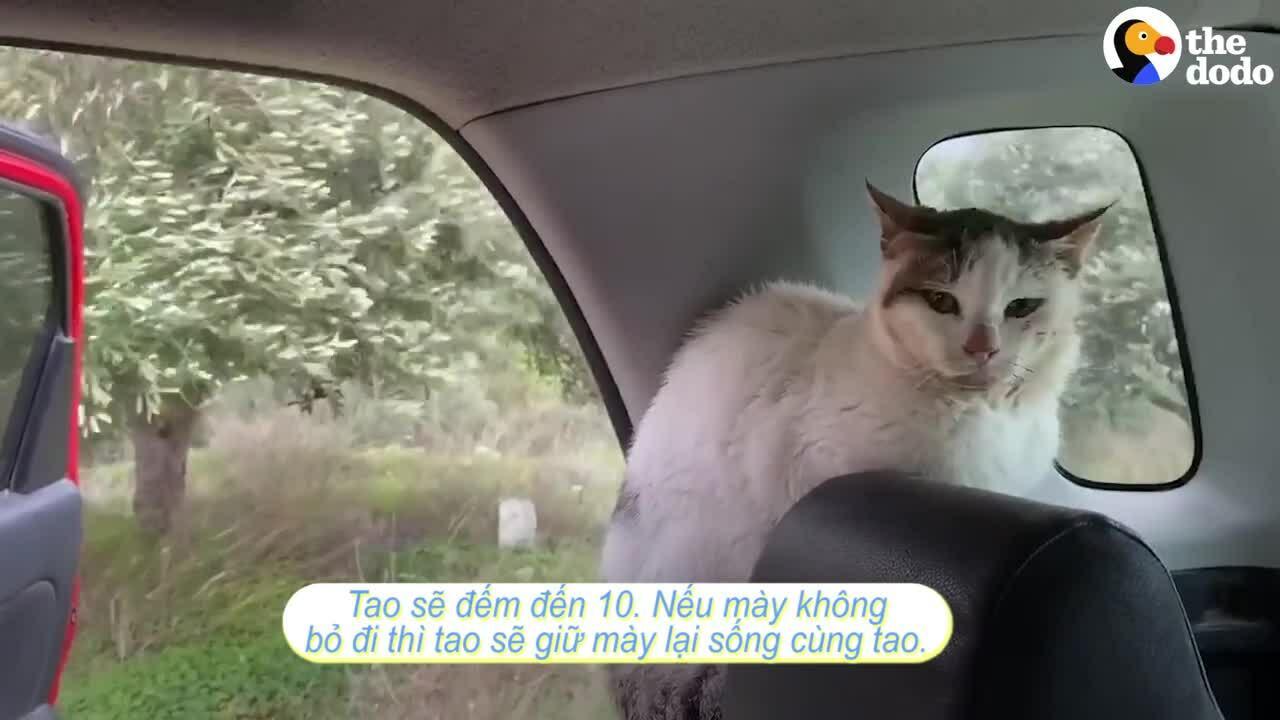 Người đàn ông chấp nhận bị cắn để làm quen với mèo