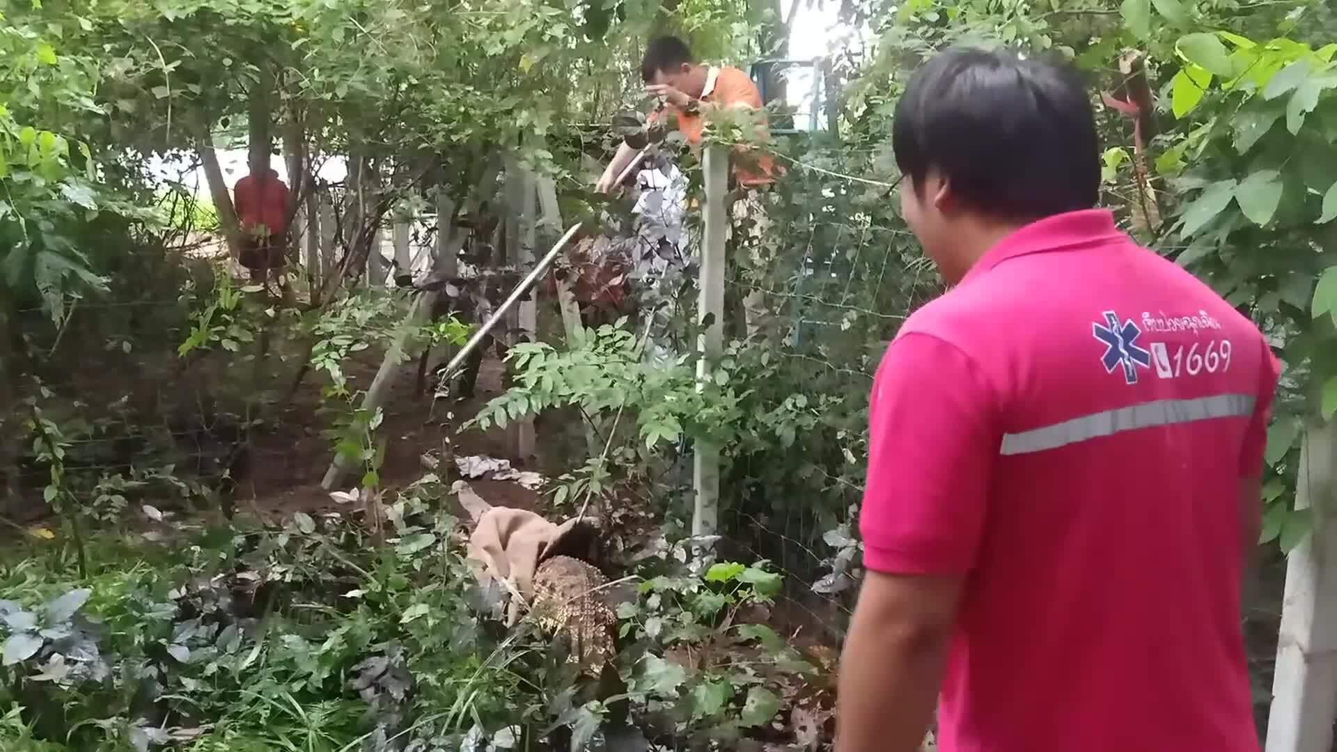 Cá sấu treo hàng rào vào nhà dân bắt gà
