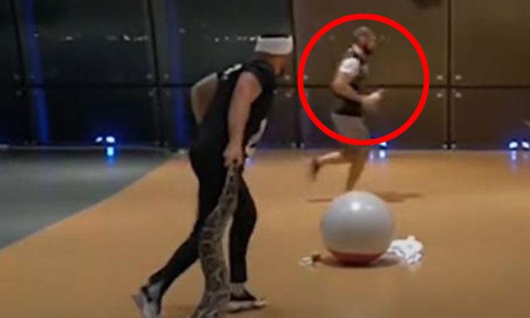 Võ sĩ 'bất bại' Khabib Nurmagomedov chạy té khói khi gặp trăn
