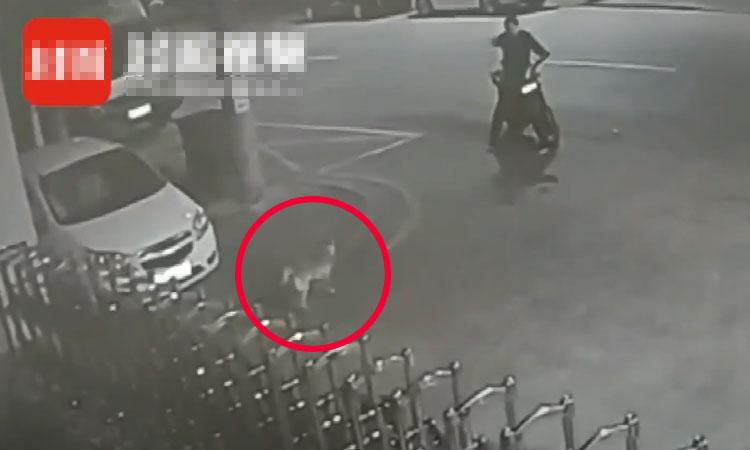Bị cảnh sát bắt vì cãi nhau với chó