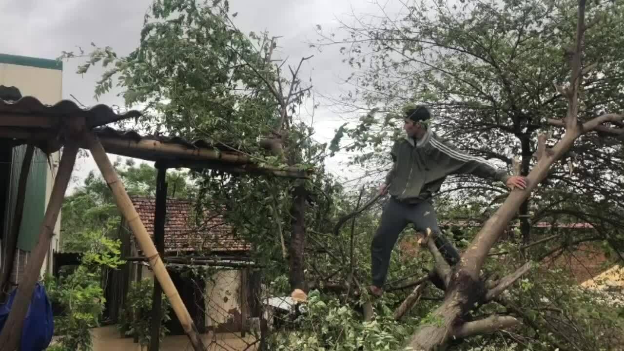 Video người dân chặt cây ở Đồng Hới