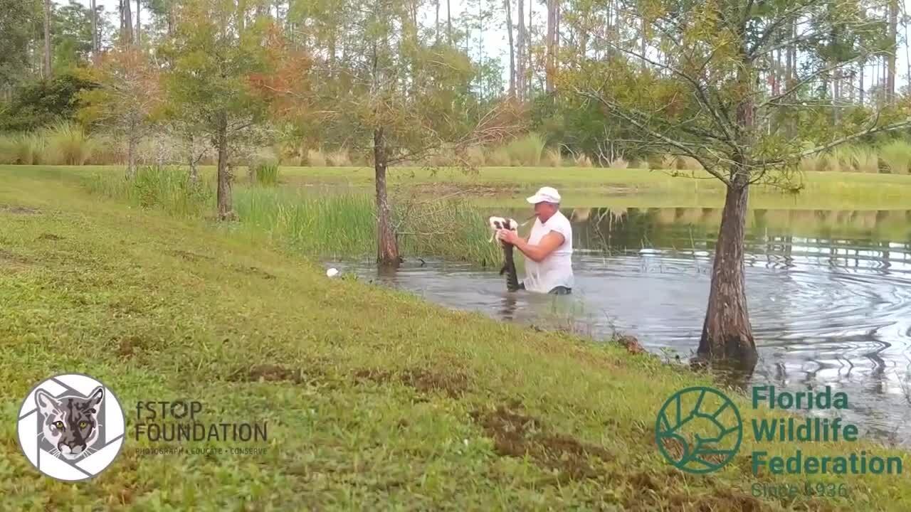 Cạy hàm cá sấu để giải cứu chó cưng
