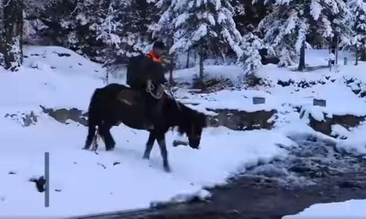 Anh chàng cưỡi ngựa đi giao hàng 