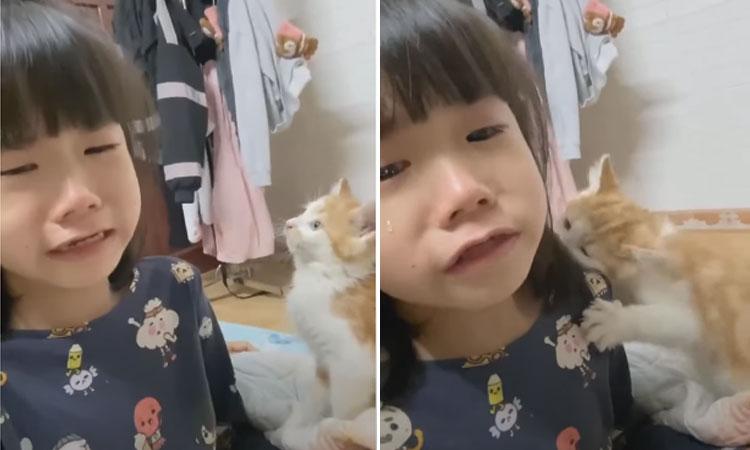 Bé gái khóc năn nỉ mẹ giữ lại mèo hư