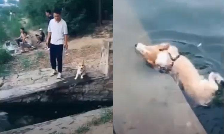 Chó cưng rơi xuống nước khi bắt chước chủ