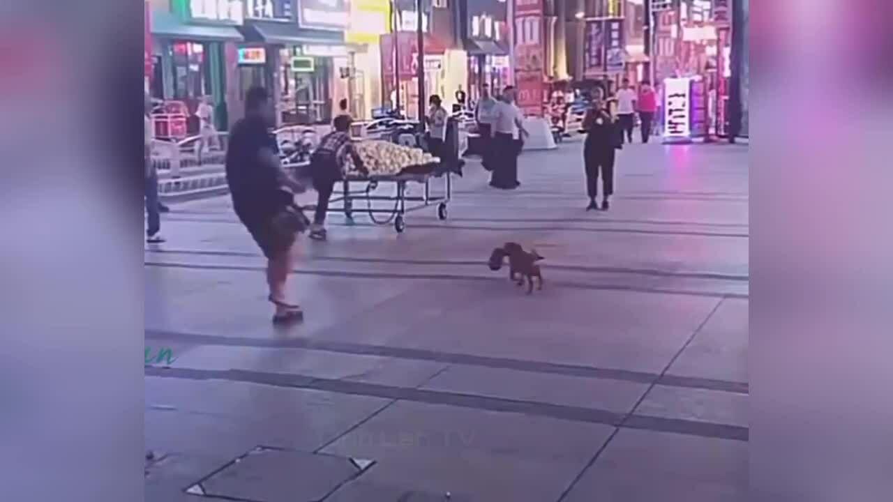 Chó tha dép chạy quanh trêu đùa chủ