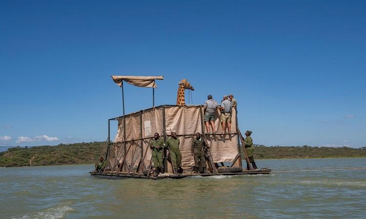 Giải cứu hươu cao cổ ở hòn đảo cá sấu bao vây