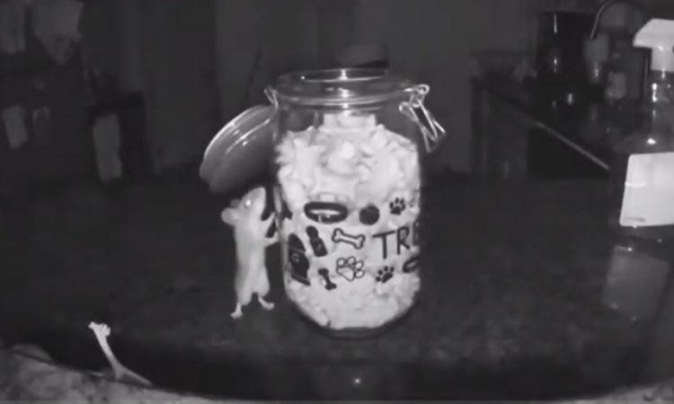 Camera ghi cảnh chuột trộm thức ăn của cún