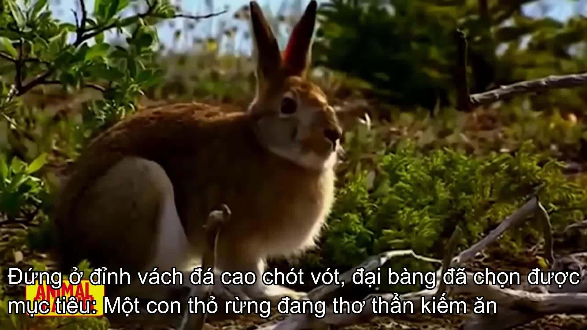 Thỏ rừng nhanh trí biến đại bàng thành trò cười