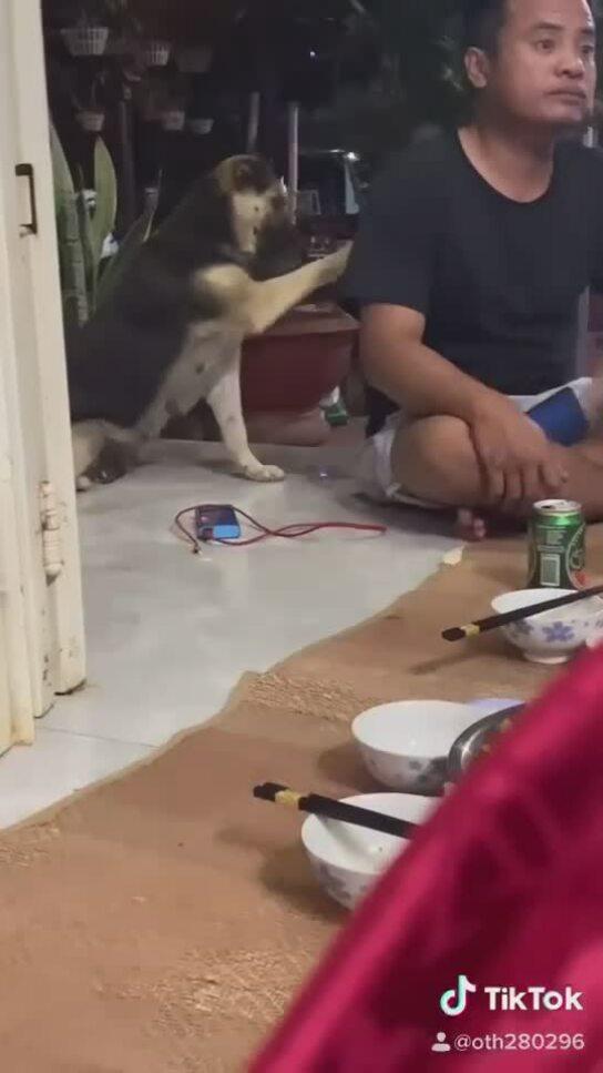 Cún bị chủ nói xấu...