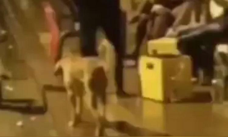 Người đàn ông bị nghiệp quật khi trêu chó