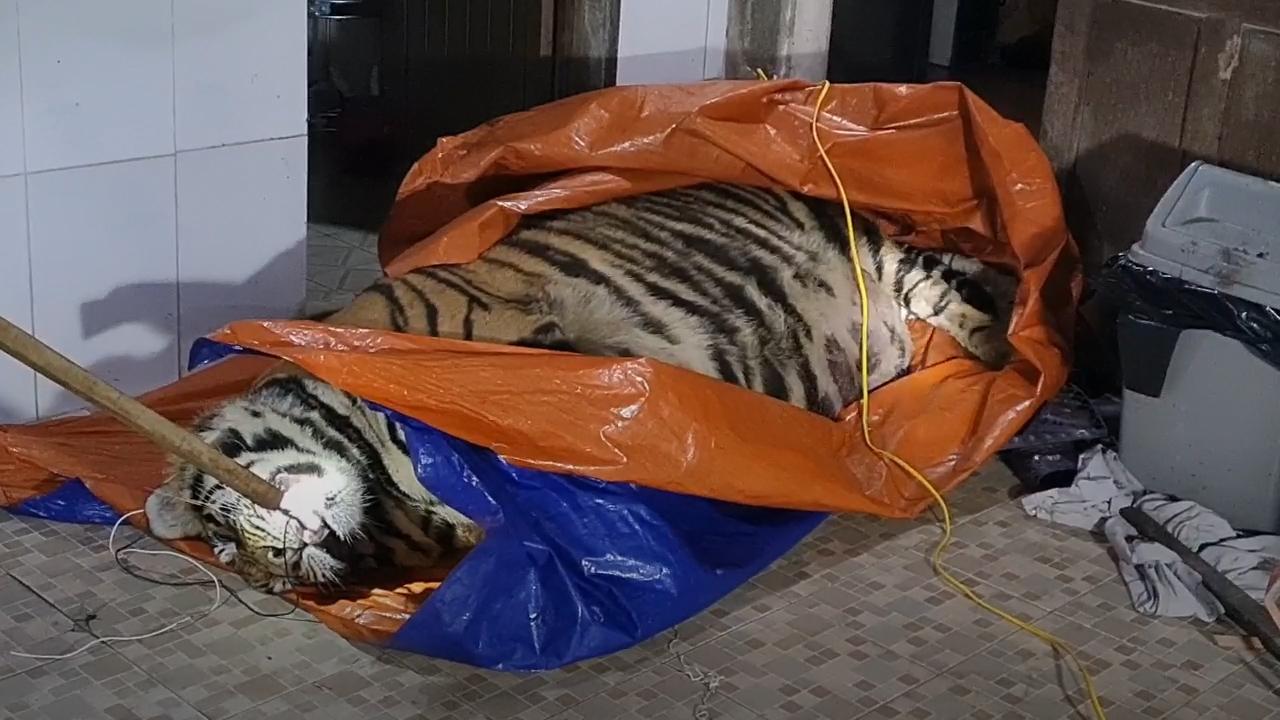 Giấu xác hổ hơn 250 kg trong nhà để nấu cao