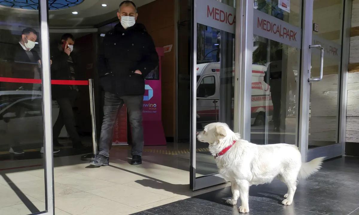 Chó chờ chủ ngoài bệnh viện 6 ngày
