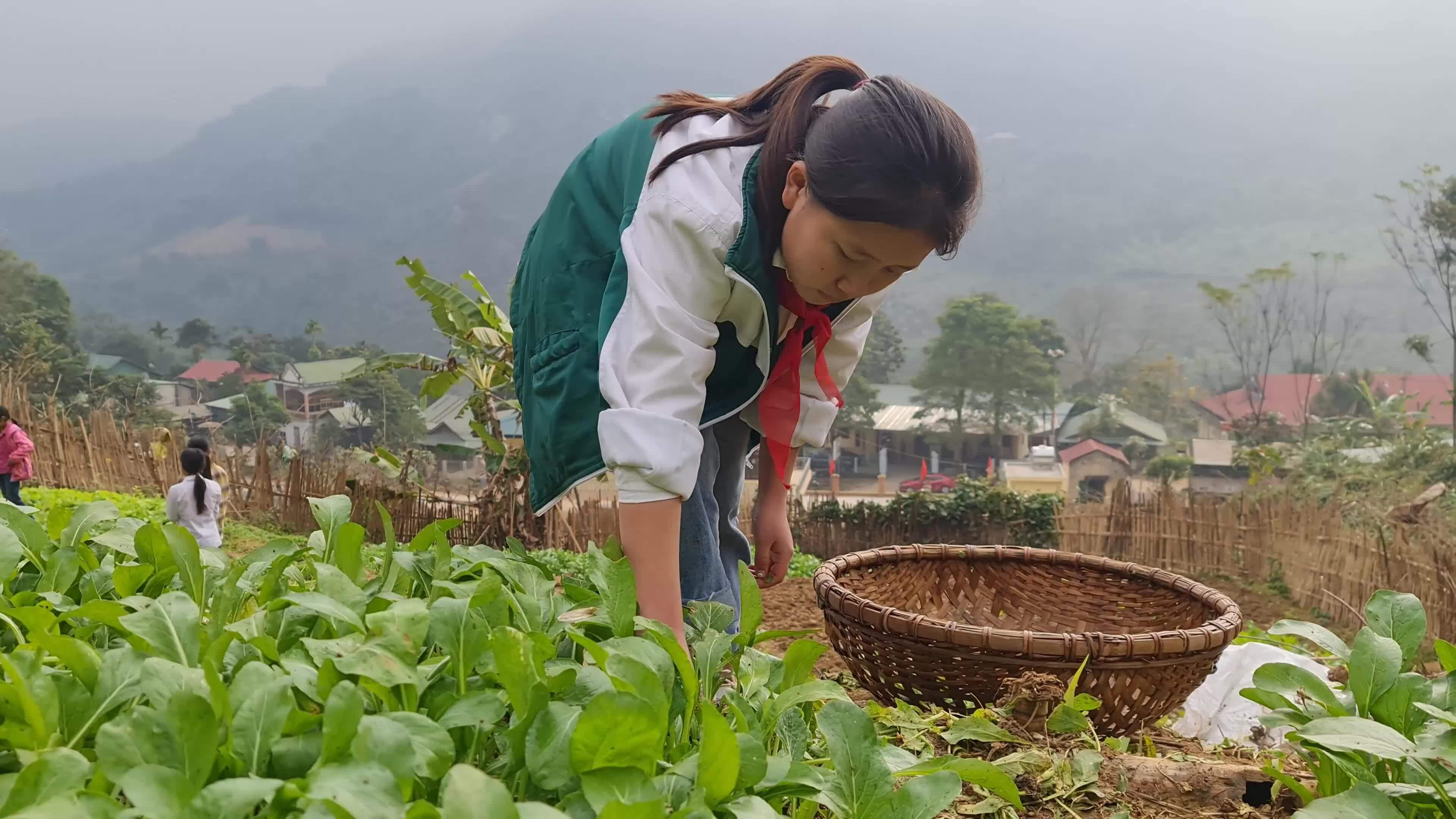 Học sinh bán trú trồng rau cải thiện bữa ăn