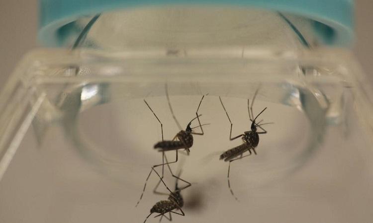Phát hiện cơ chế giao phối của muỗi Anophene