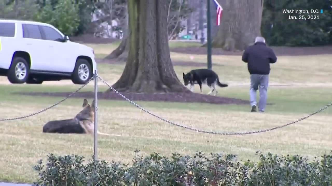 Chó cưng của Biden vào Nhà Trắng