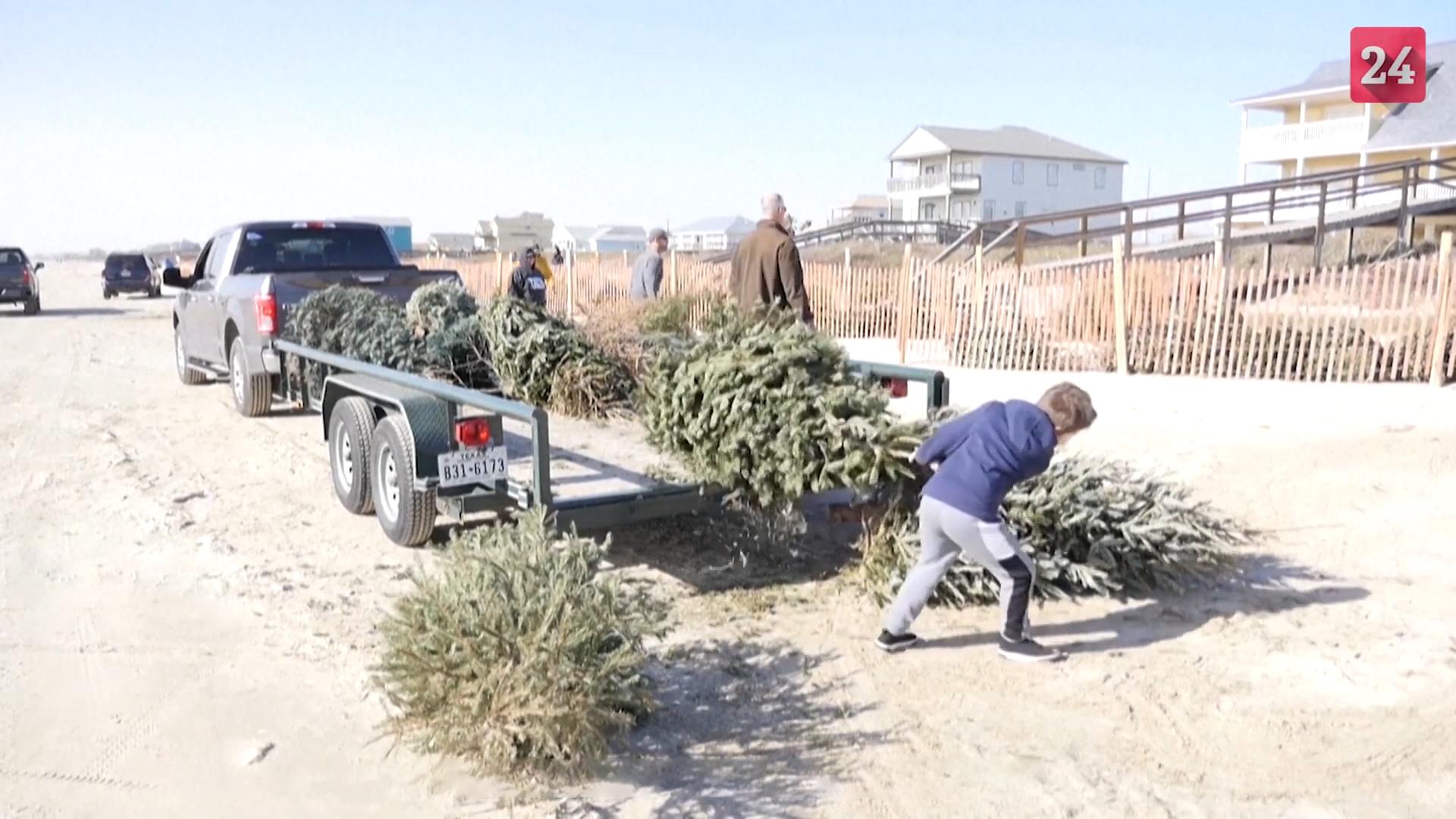Hồi sinh bãi biển bị tàn phá bằng cây thông Noel