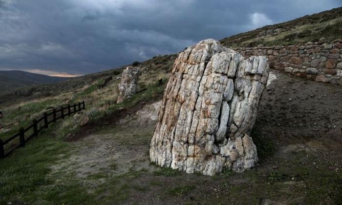 Cây hóa đá nguyên vẹn 20 triệu năm