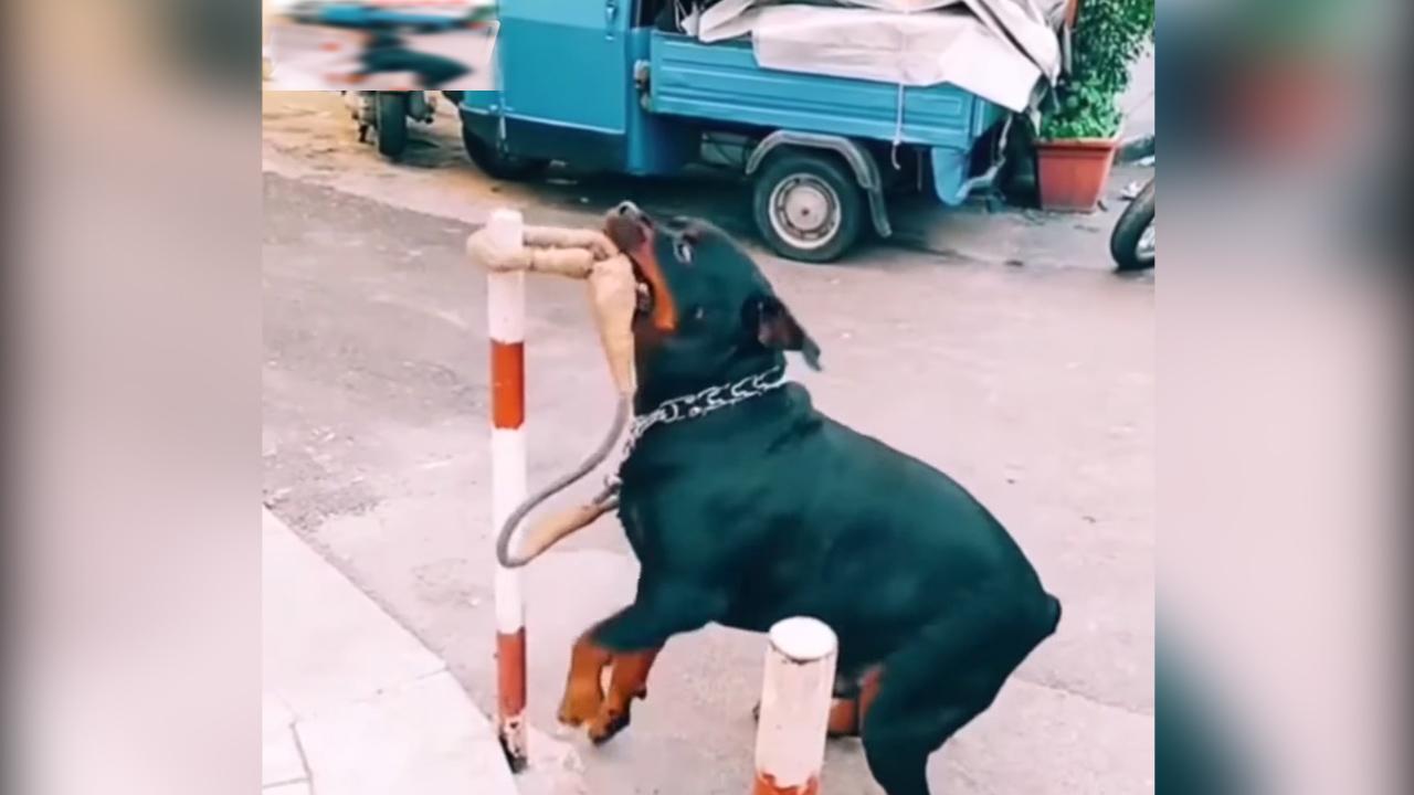 Chọc nhầm chó thông minh