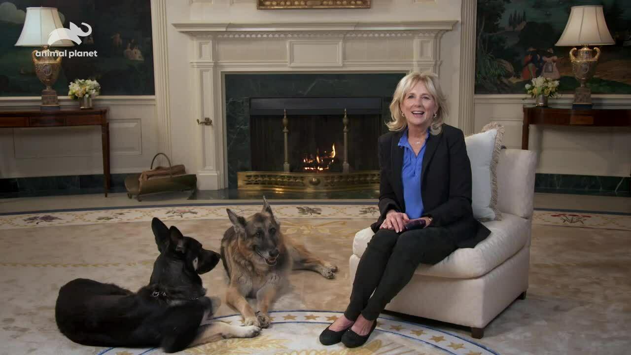 Đệ nhất phu nhân Mỹ kêu gọi đeo khẩu trang cùng hai chó cưng