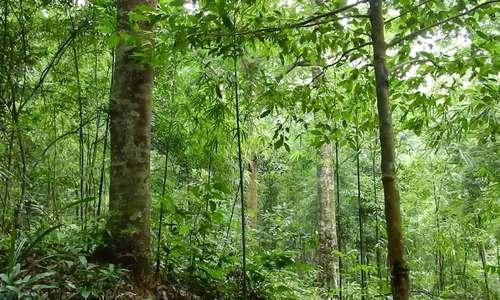 Già làng Triệu Tài Cao: 'Trồng rừng cho muôn đời sau'