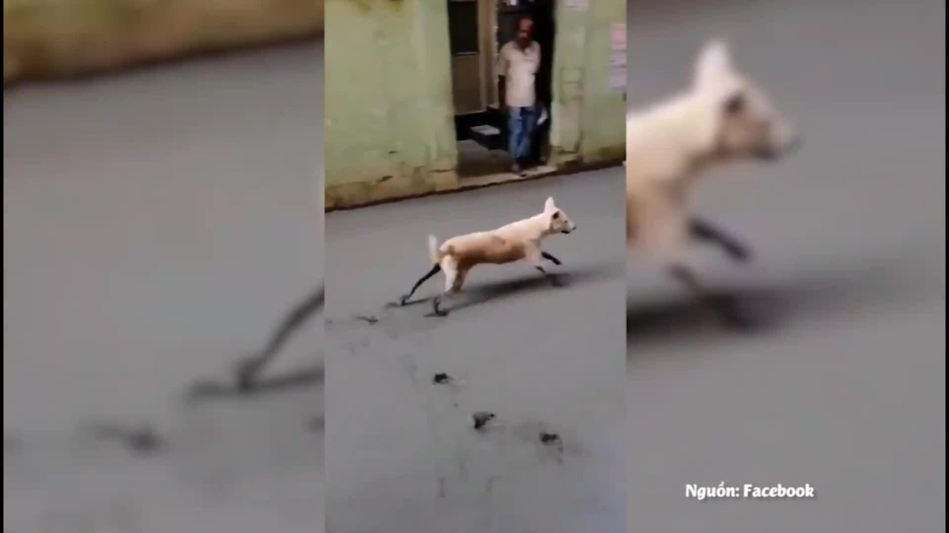 Thợ xây ngán ngẩm vì chó vào đường bê tông mới đổ