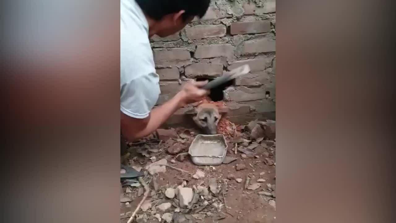 Chủ phá tường cứu chó cưng