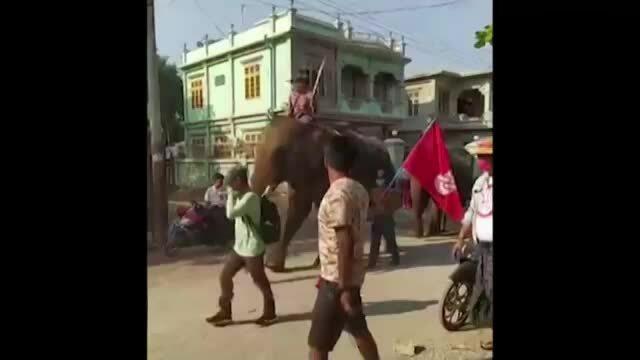 Cưỡi voi đi biểu tình ở Myanmar