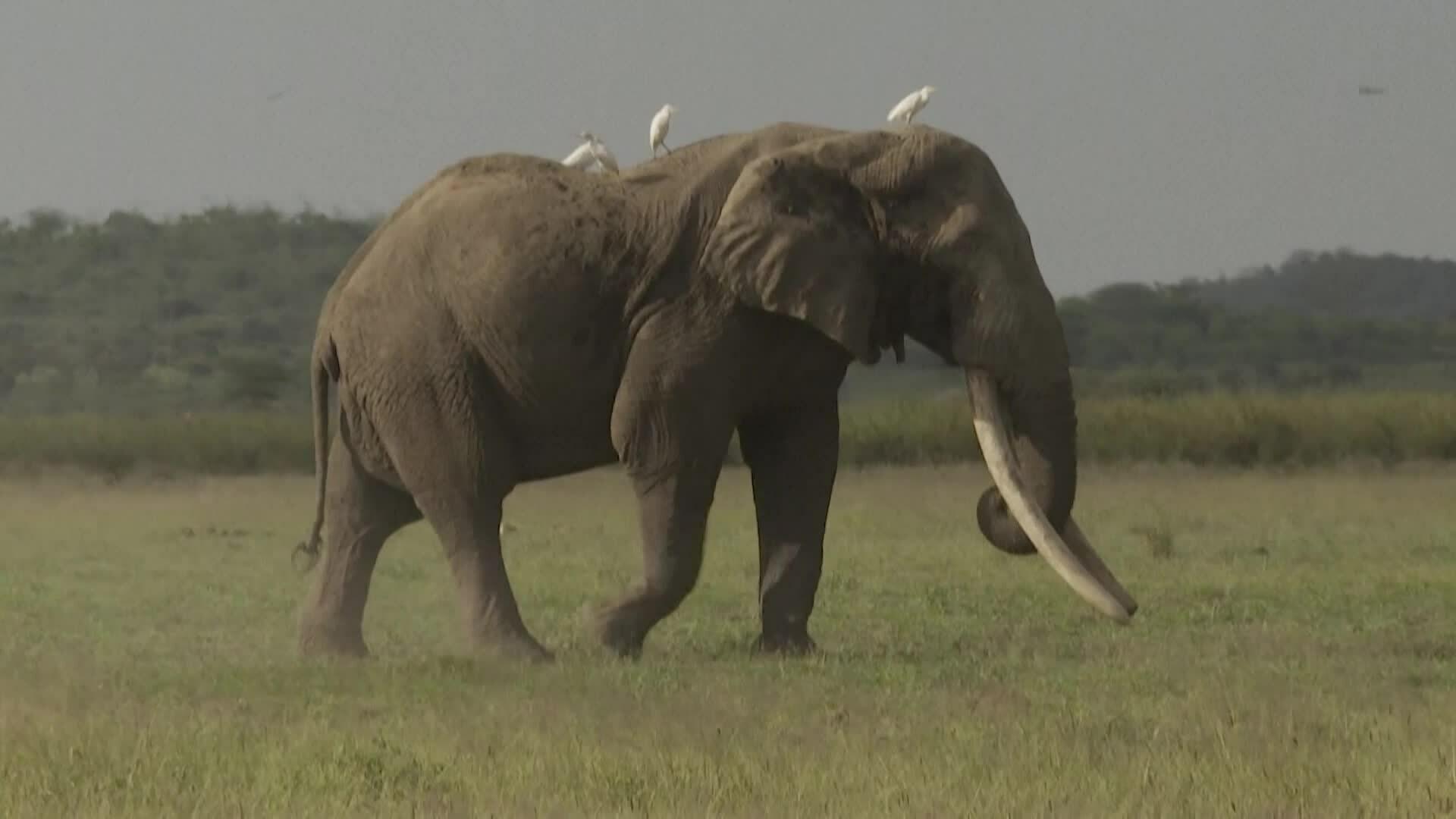 Cuộc chiến giành lãnh thổ giữa voi và bơ