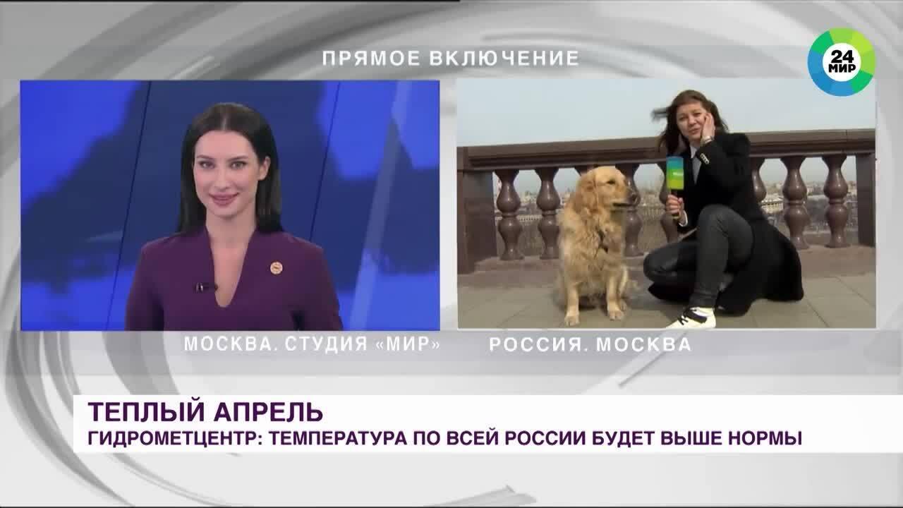 Chó giật micrô của nữ phóng viên