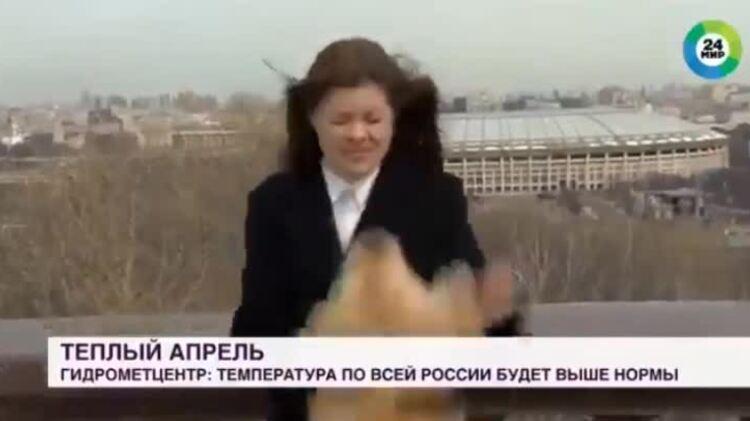 Chó giật micro của phóng viên trên sóng trực tiếp