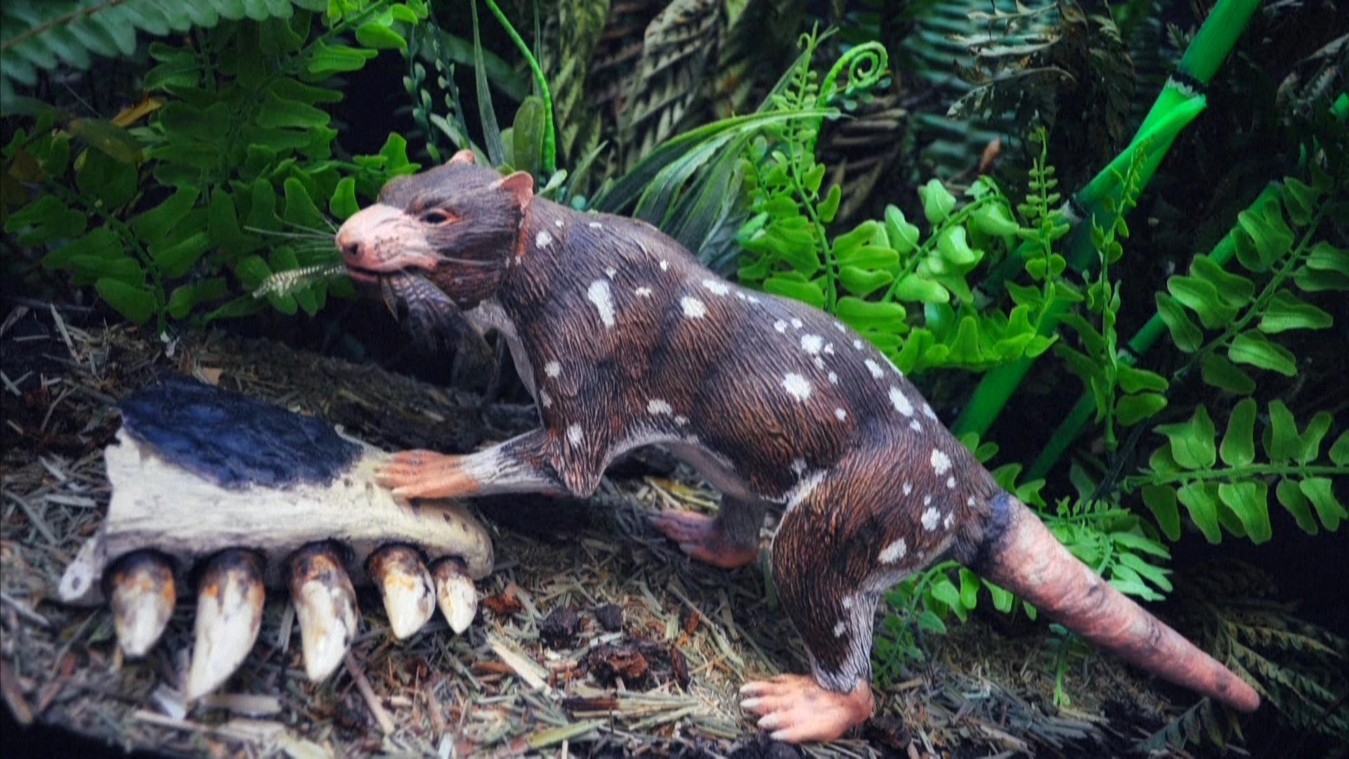 Phát hiện loài thú tiền sử có hàm răng kỳ quái