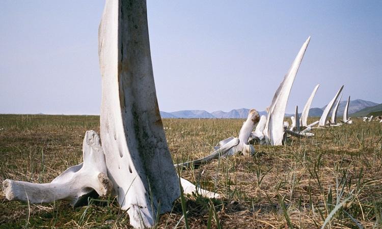 Thung lũng xương cá voi bí ẩn ở Siberia