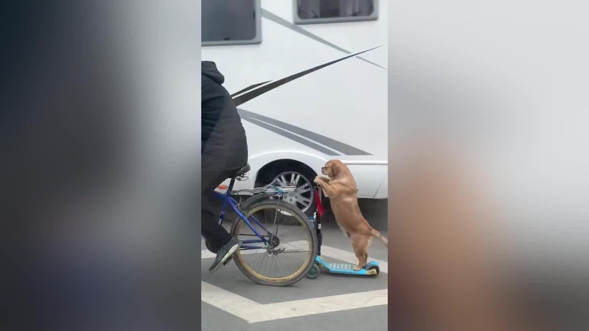 Chó cưng giữ thăng bằng 'siêu đẳng'