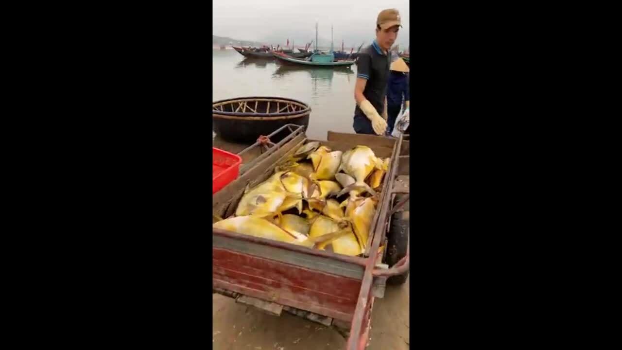 Ngư dân trúng mẻ cá 600 triệu đồng