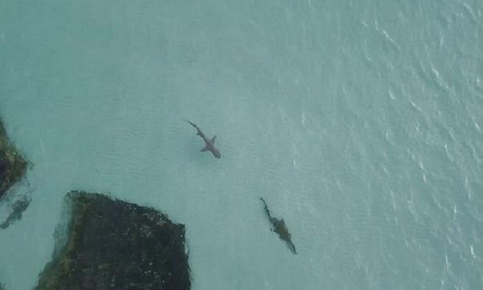 Cá sấu bỏ chạy khi đụng độ cá mập