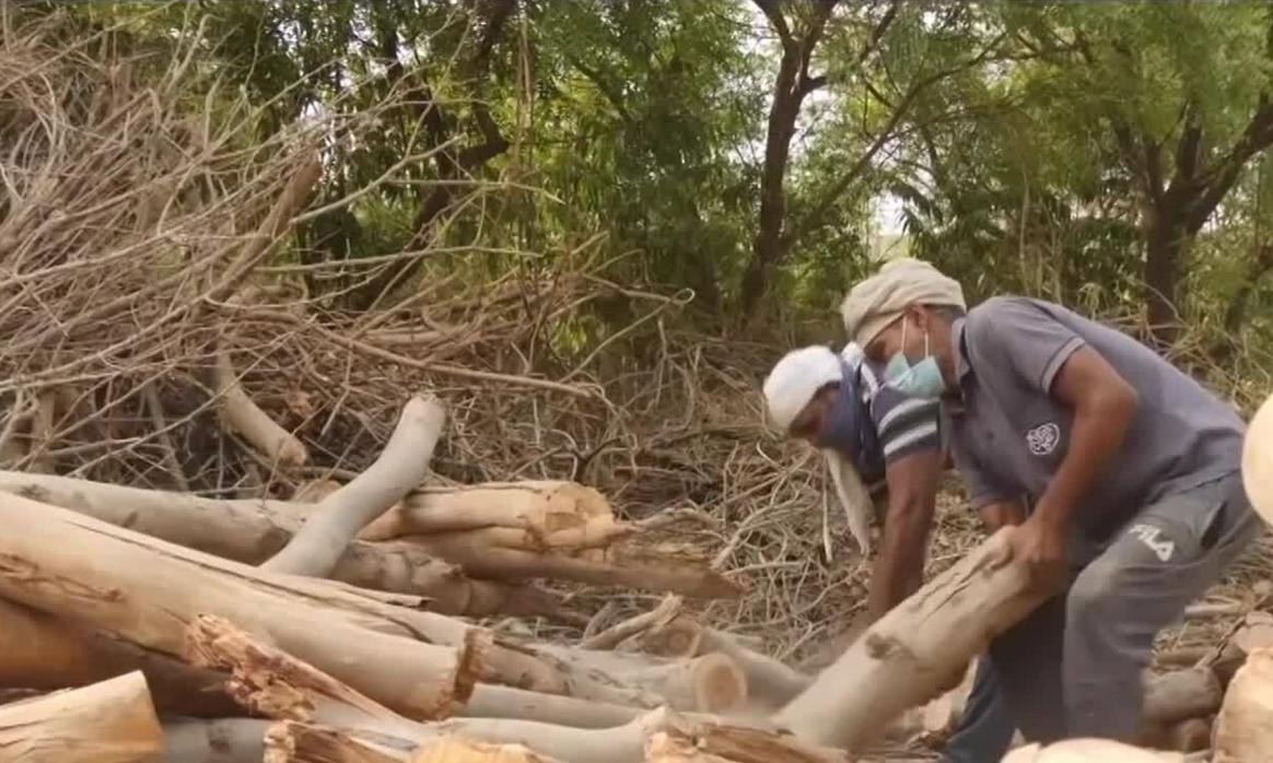 New Delhi chặt cây công viên hỏa táng bệnh nhân Covid-19