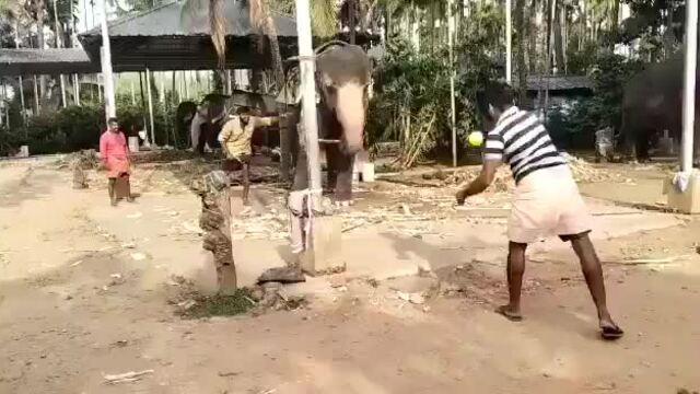Voi chơi bóng gậy cùng trai làng