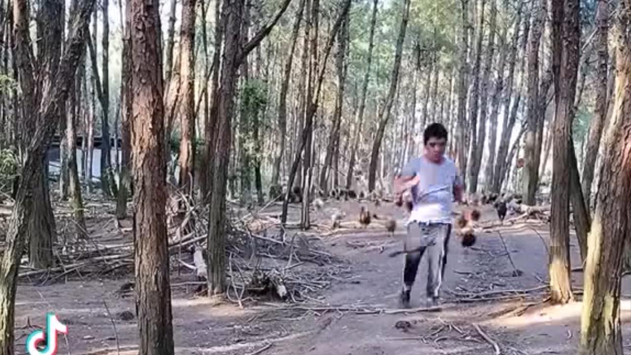 Chàng trai dẫn đàn gà như đánh trận