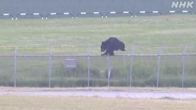 Gấu tấn công căn cứ quân sự Nhật Bản