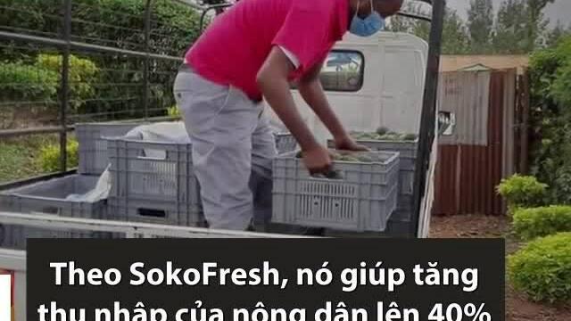 Container lạnh chạy bằng năng lượng mặt trời