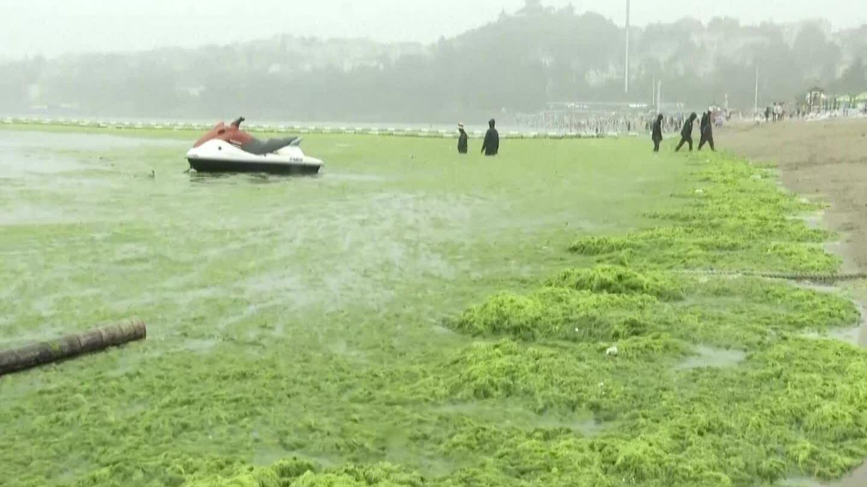 'Thủy triều xanh' tồi tệ nhất ở Thanh Đảo