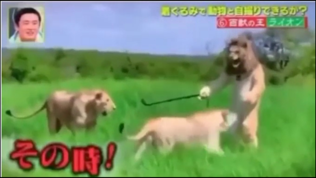 Chạy thục mạng vì giả sư tử đực trêu con cái