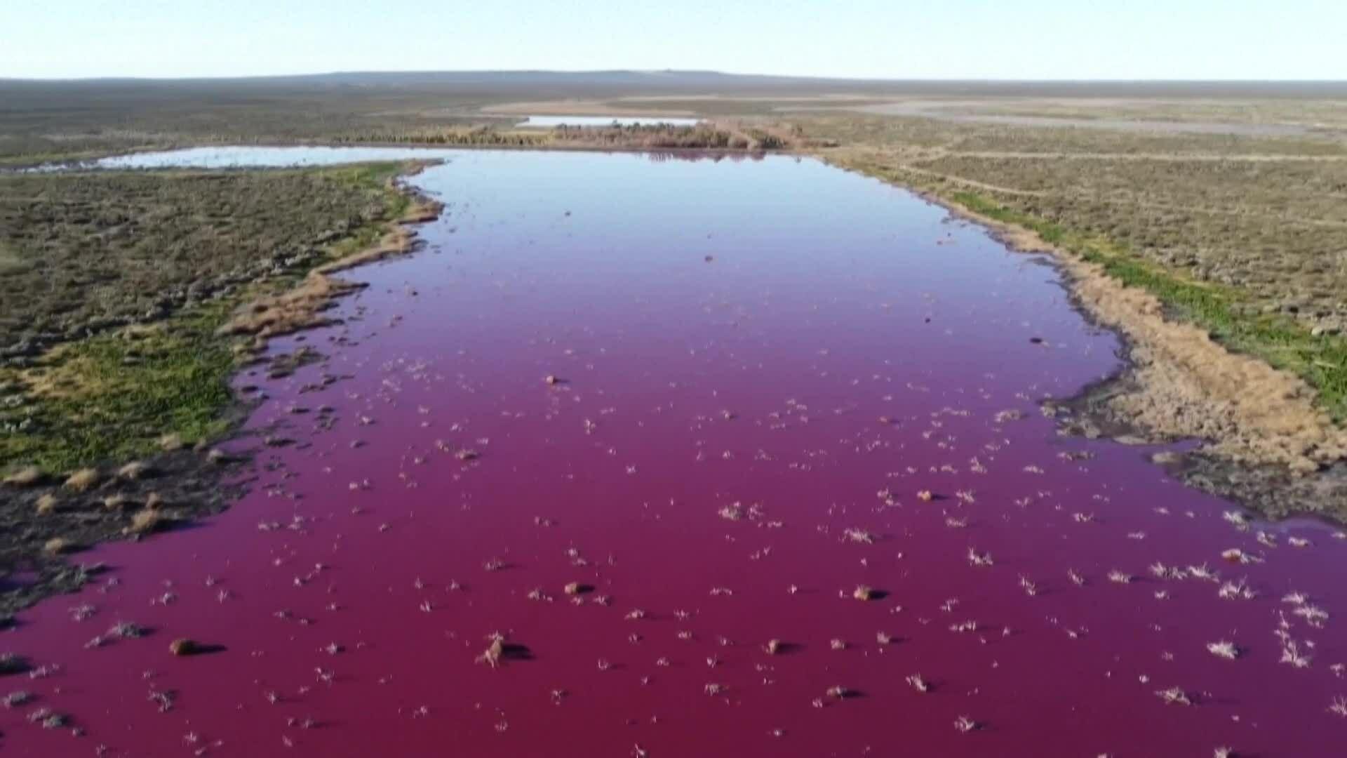 Đầm phá rộng hơn 10 ha bất ngờ chuyển màu hồng