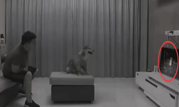 Chó cưng 'hồn vía lên mây' vì bị dọa ma
