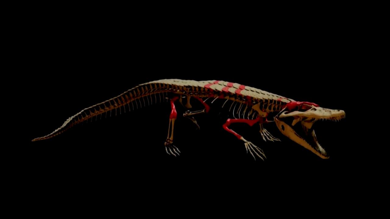 Tái tạo 3D hóa thạch cá sấu 150 triệu năm